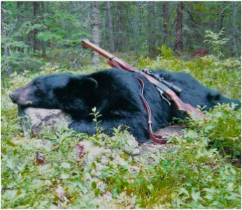 Click for Bear Hunting